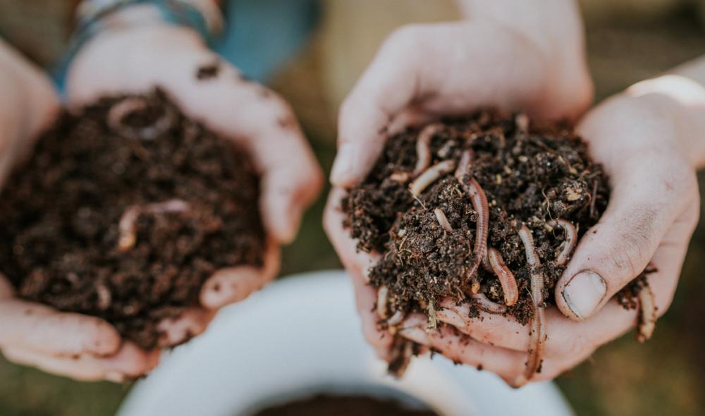 Mit Würmern die Welt nachhaltiger gestalten: Wurmkisten-Erfinder David Witzeneder beendet unsere Sätze