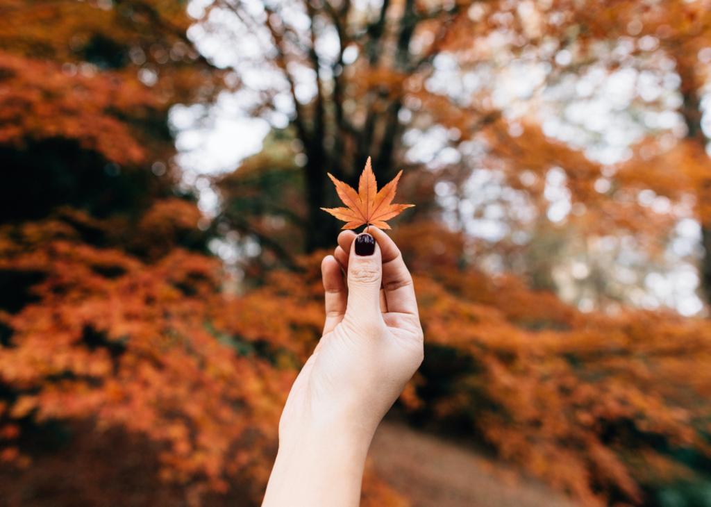 Diese 26 Dinge, die du in Österreich tun kannst, bringen dich sofort in Herbststimmung