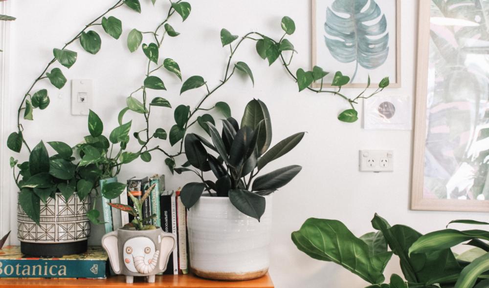 Warum Pflanzen die neuen Haustiere sind und was Instagram damit zu tun hat