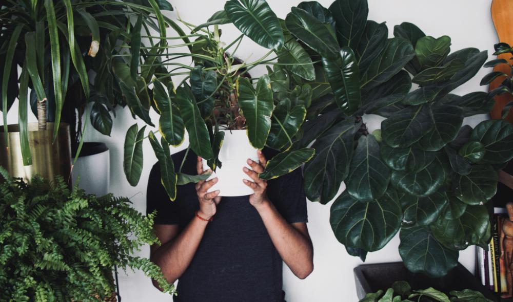 Quiz: Welche Zimmerpflanze bist du?