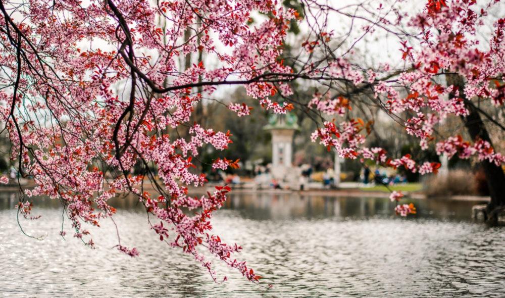 Die schönsten Fotos von Österreich im Frühlingskleid, die dir Lust aufs Leben machen