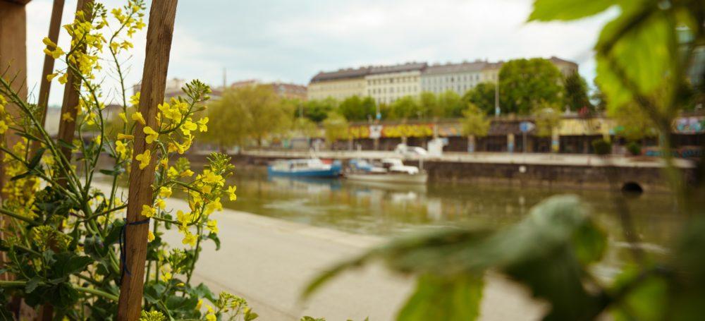 Urban Gardening: warum die Stadt es braucht, aber du selbst umso mehr